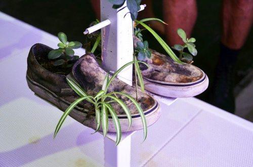 tsvety-v-staroj-obuvi