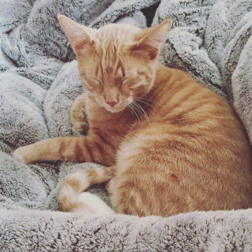 кот на одеяле
