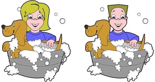 помыть животное от блох
