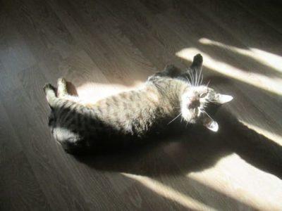 кот на солнышке