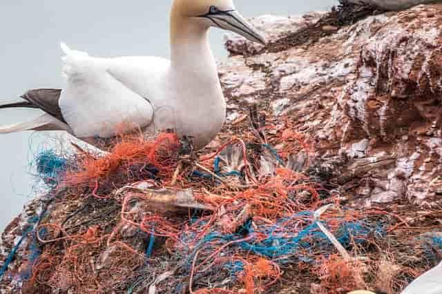 птицы страдают от мусора