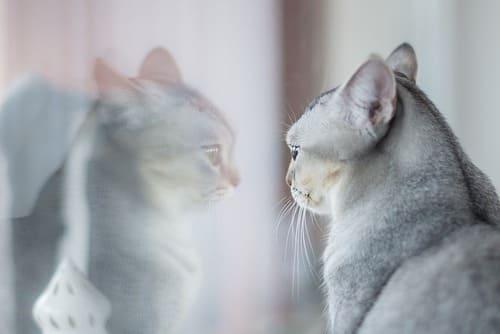 кошка у отполированного уксусом окна