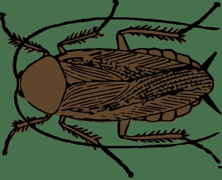 таракан рисунок