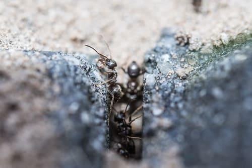муравьи в щелях